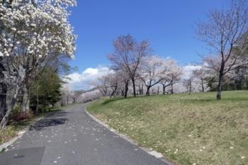 八郎沼公園1