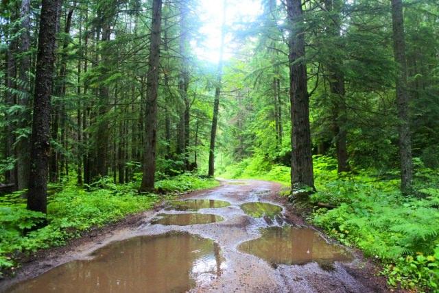 雨上がりの林道